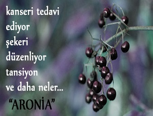 Photo of Aronia – Rus Yaban Mersini